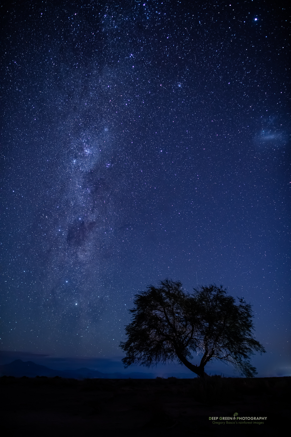 A rare tree in the Atacama Desert of Chile at night wth the Milky Way