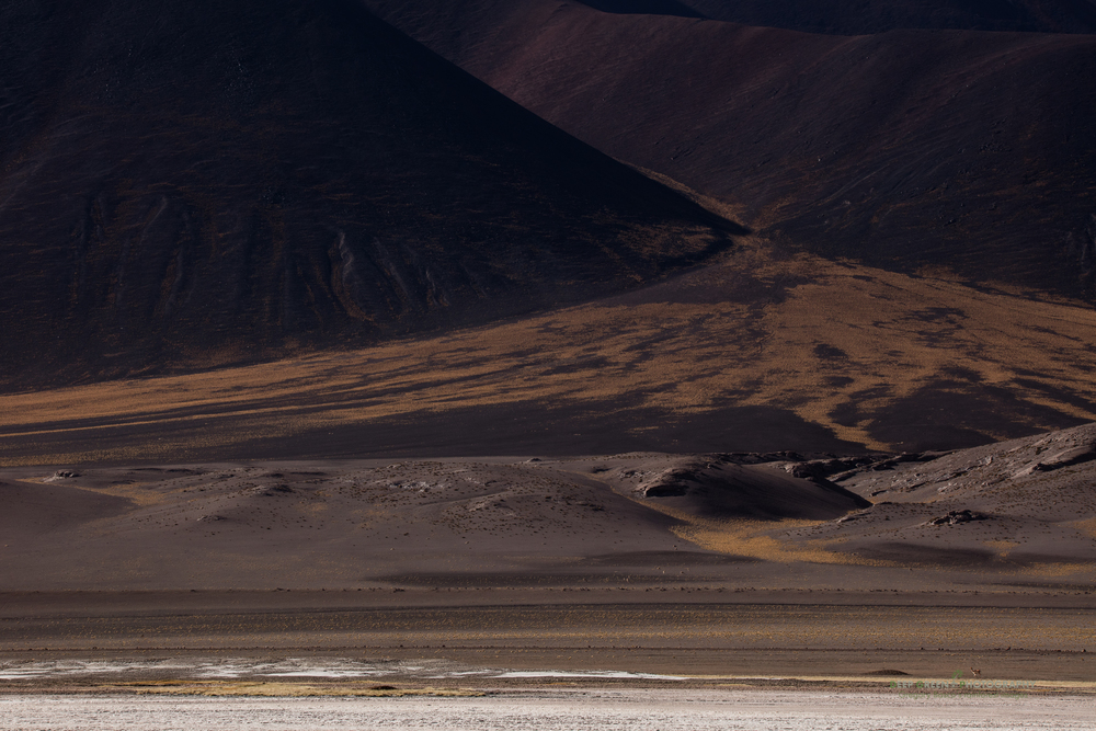 A lone vicuña stands along the dramatic shoreline of a salt lake high in the Atacama desert of Chile