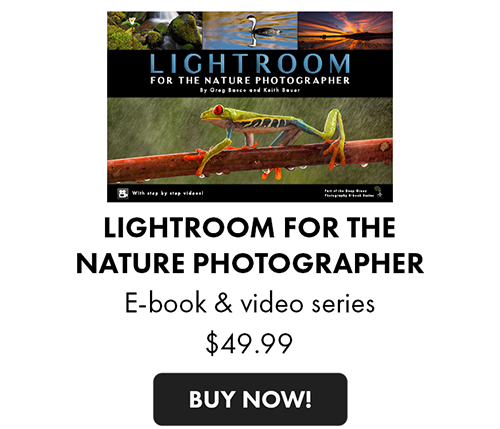 lightroom-for-the-nature-photographer.png
