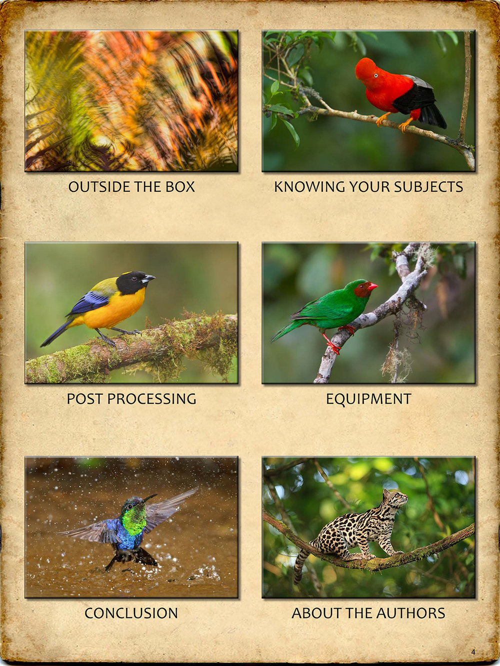 THE-GUIDE-TO-TROPICAL-NATURE-PHOTOGRAPHY-sample4.jpg