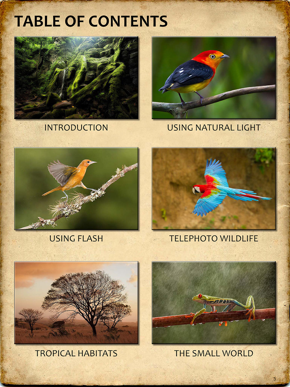 THE-GUIDE-TO-TROPICAL-NATURE-PHOTOGRAPHY-sample3.jpg