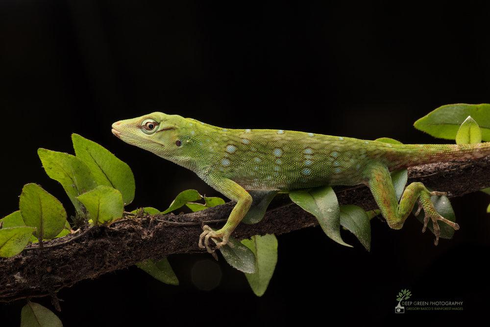 DGP-stock-reptiles-131.jpg