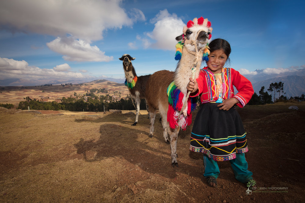 A young Inca girl dresses herself and her alpaca to call attention to her family's roadside tourist stand, Sacred Valley, Peru