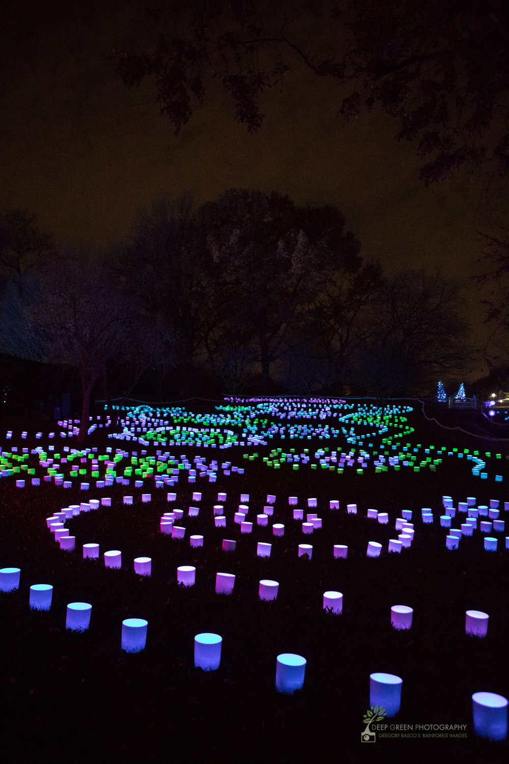 The Missouri Botanical Garden's annual holiday light show merges art and nature
