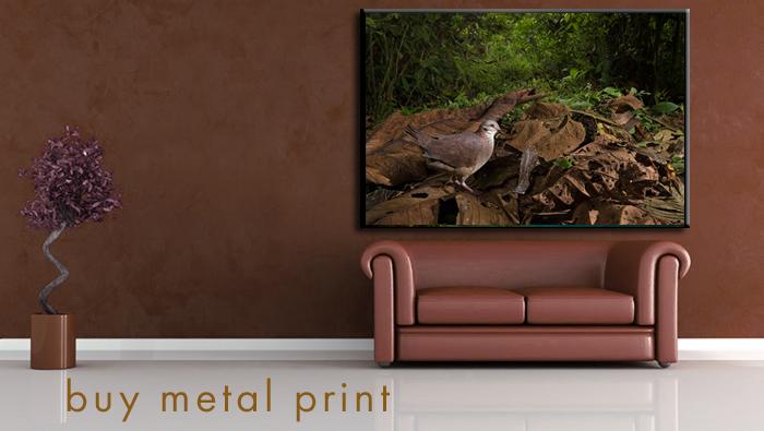 buy-behind-the-image-metal-prints.png
