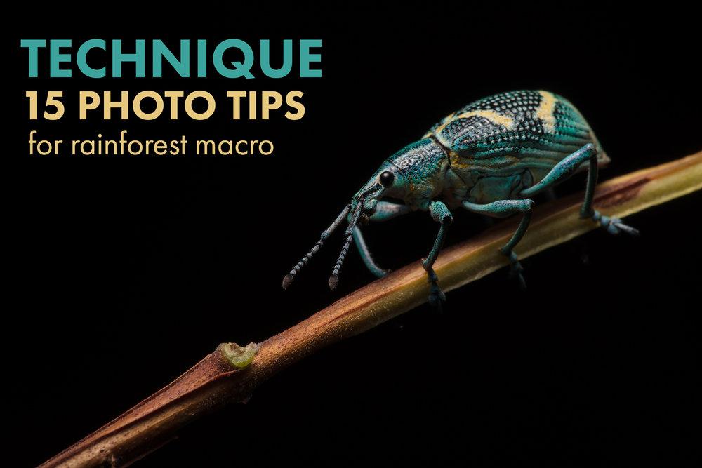 15-macro-tips-banner.jpg