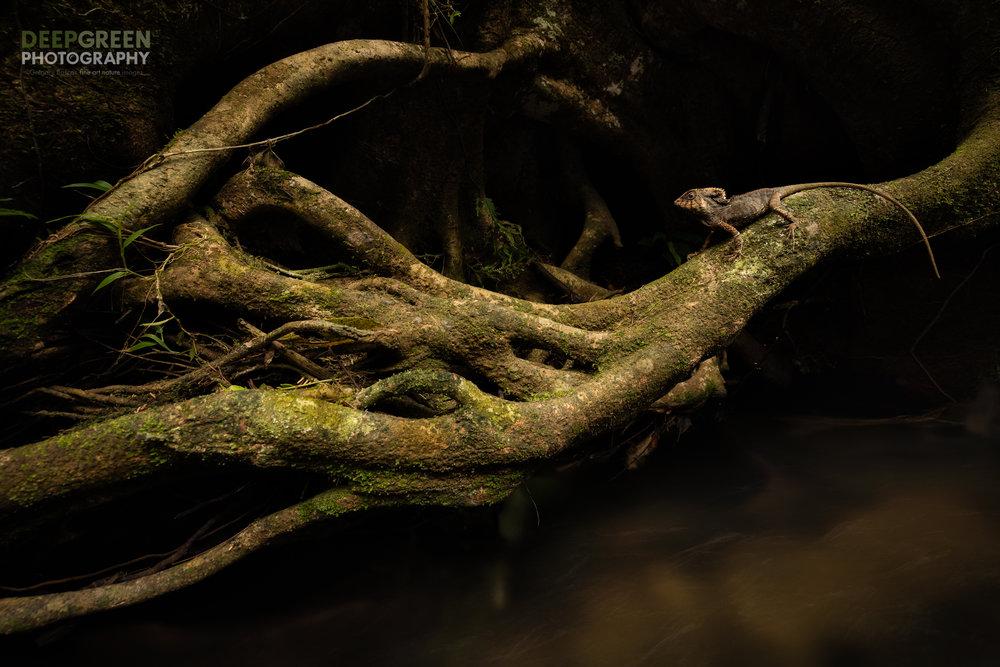 Rainforest Chiaroscuro