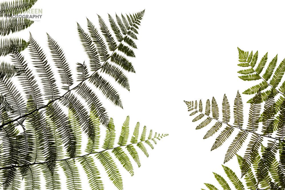 The Art of Botany 4