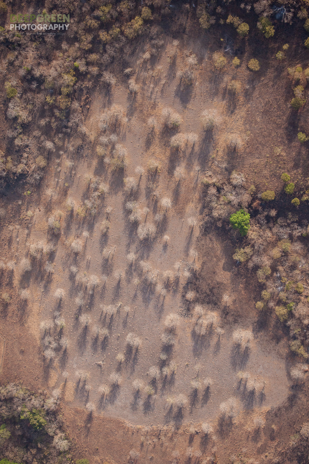 Decades of deforestation have left many areas of Costa Rica's Guanacaste in a semi-desert state