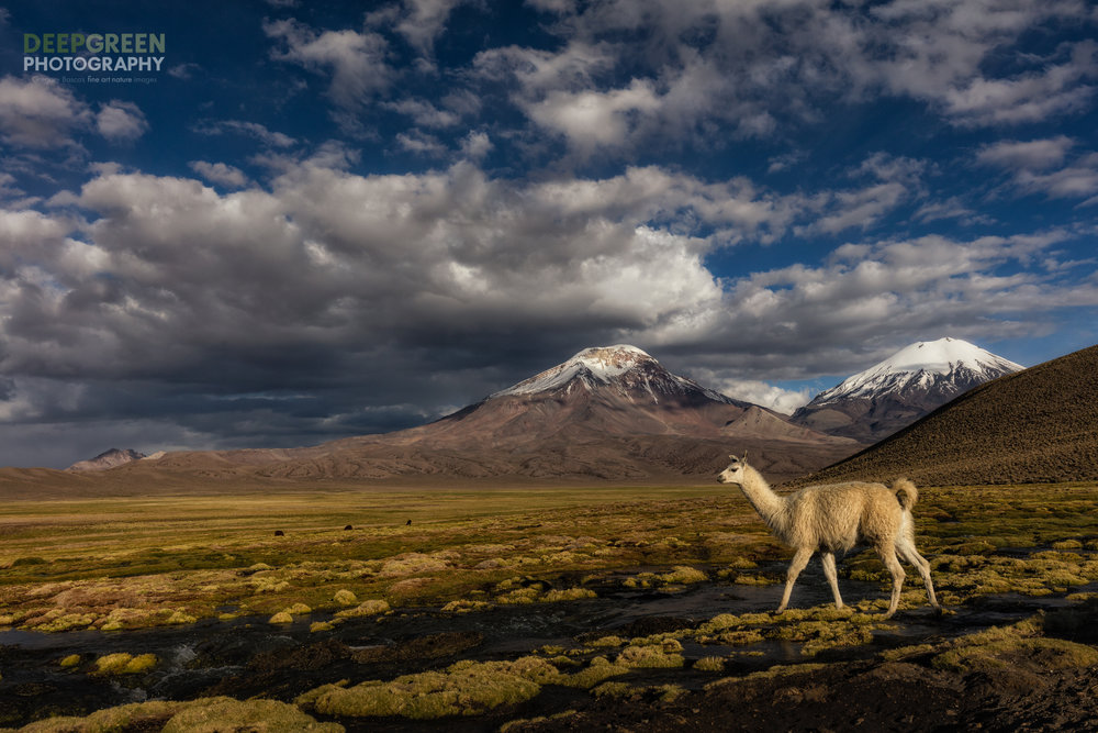 An Altiplano Classic