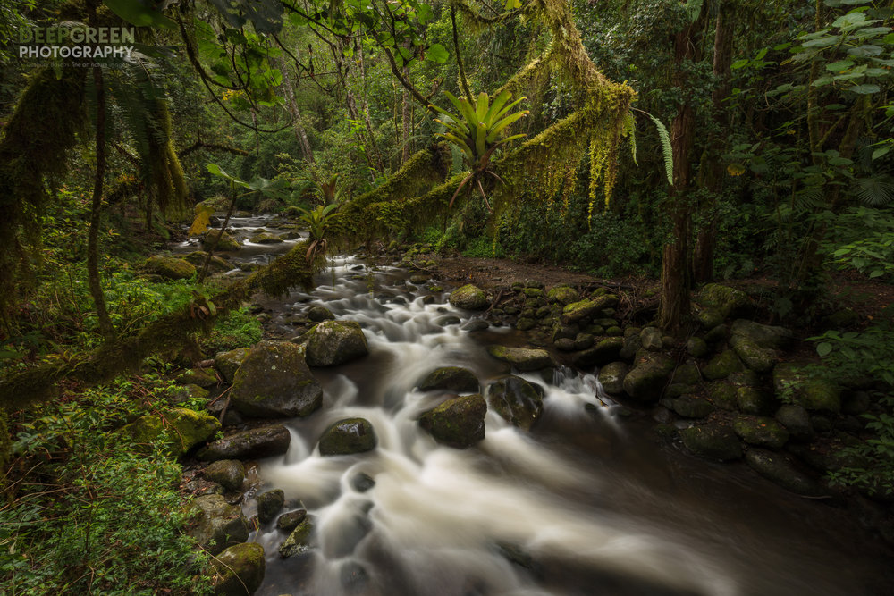 The Savegre River forms the central vein of a new UNESCO biosphere reserve in Costa Rica. I used a long exposure and off-camera flash to try to capture lush tropical yet enchanted feel of this area of the country.