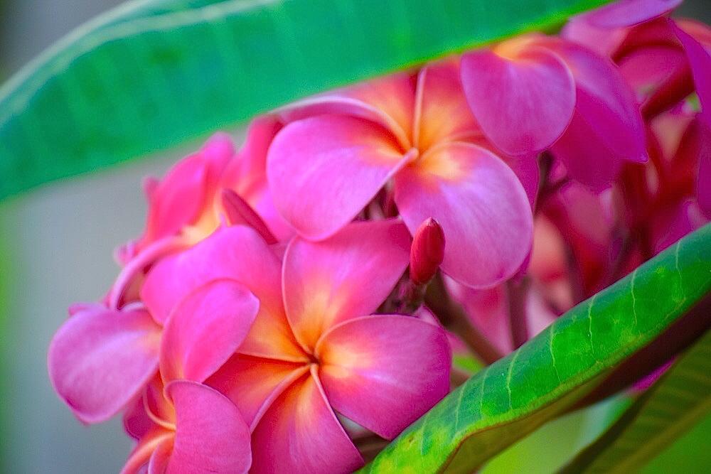 BeyondTheFocus_Flower.jpg