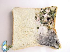 食パンの左半分に  AT254を塗布