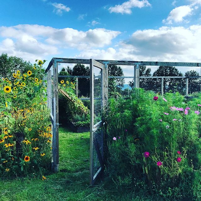Come on in! 🌱🌻 . . . . . . . .#inlovewithmygarden #organicvegetablegarden #wildflowers #upstateny