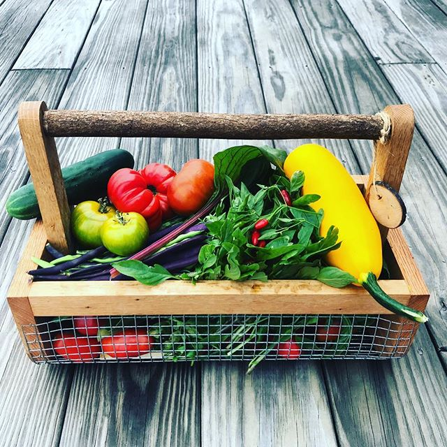 And the garden keeps on giving. 🌱 . . . . . . .#organicvegetablegardening #soil #getoutside