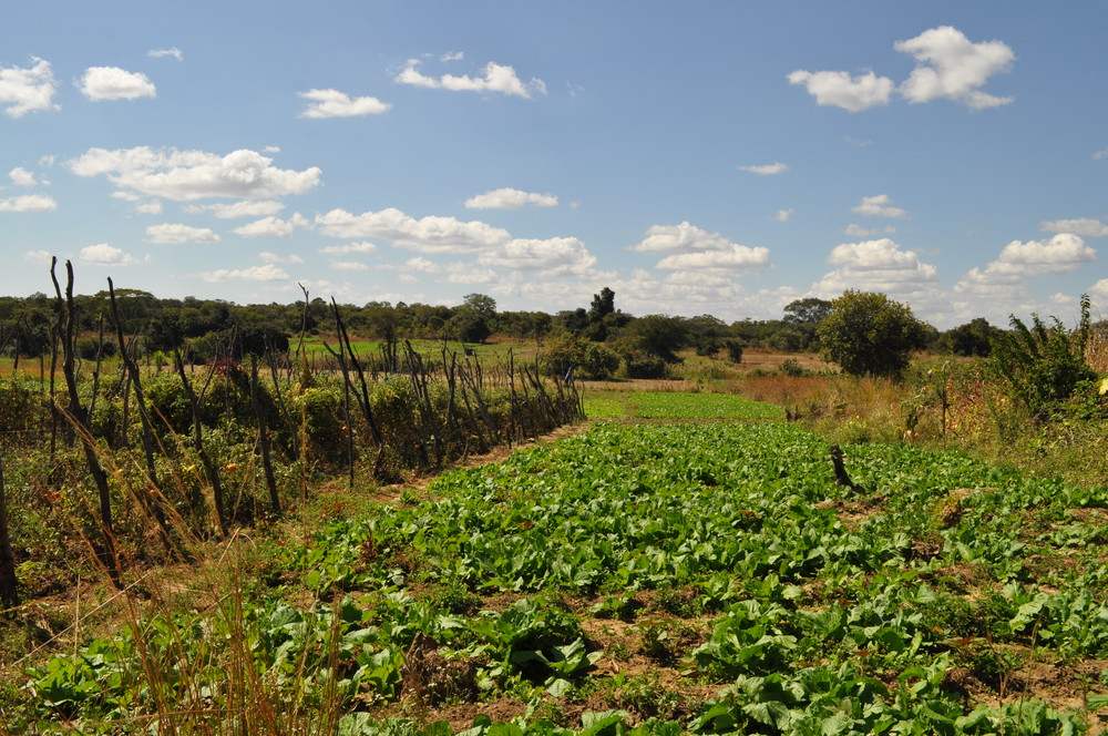 Farming is the main source of income in Kunchubwe Village.