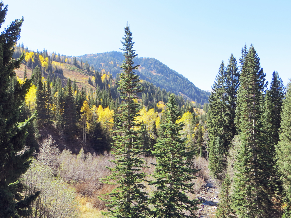 Fall colors in Little Cottonwood Canyon -- Cotton Cashmere Cat Hair
