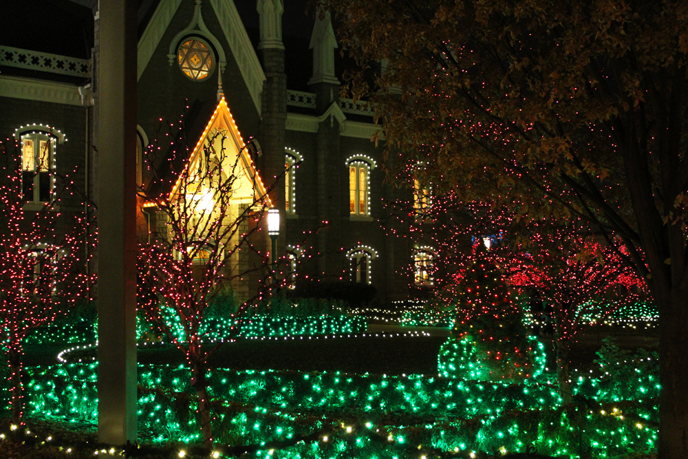 Six activities to do during the holidays: Check out Christmas lights — Cotton Cashmere Cat Hair