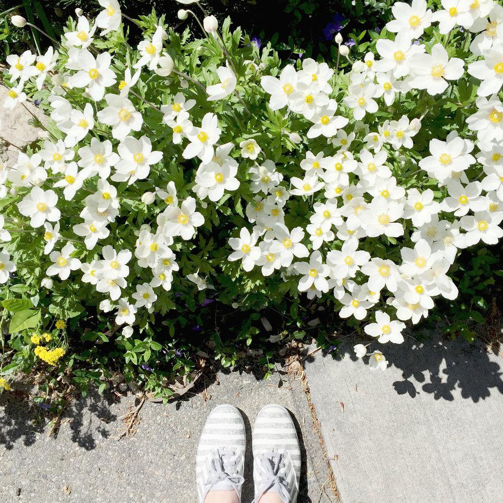 Striped Keds + fresh blooms — via Cotton Cashmere Cat Hair