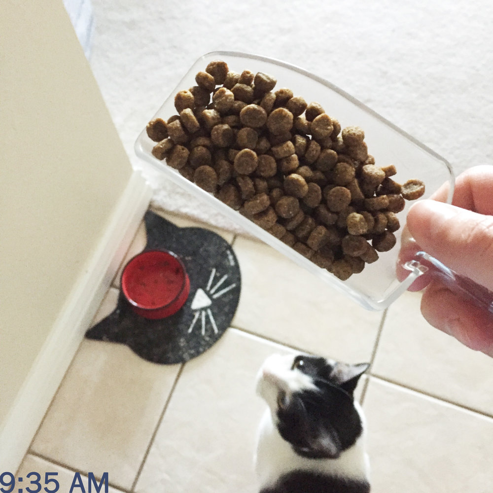 Day in the life of a PhD student: Feeding the cats breakfast — Cotton Cashmere Cat Hair