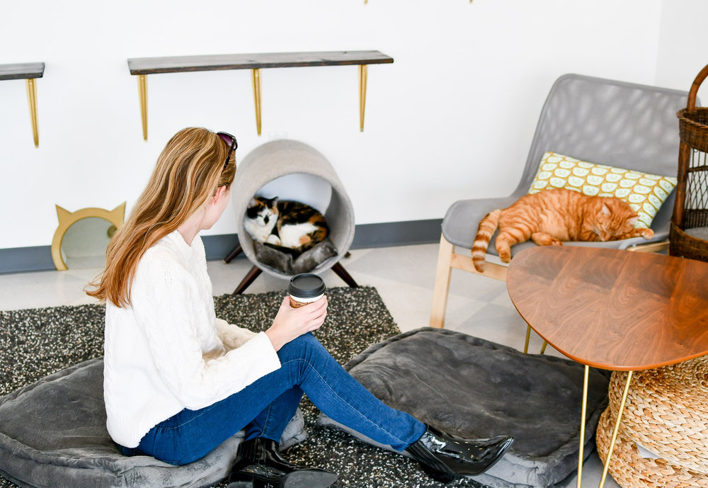Inside the cat room at Tinker's Cat Cafe, Salt Lake City, Utah — Cotton Cashmere Cat Hair