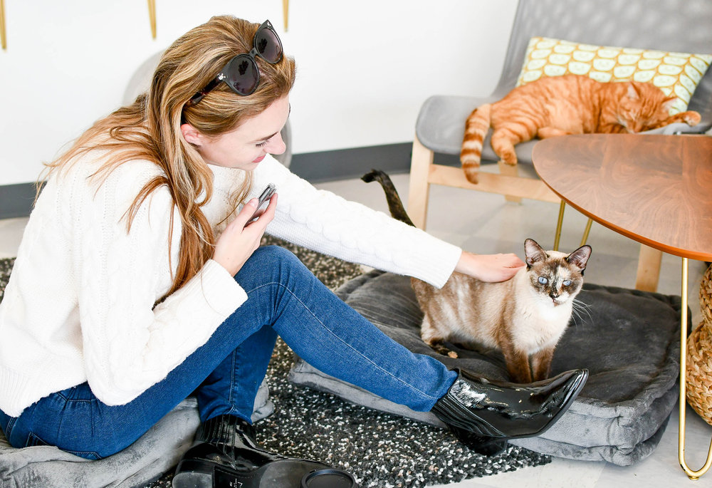 Petting cats inside Tinker's Cat Cafe, Salt Lake City, Utah — Cotton Cashmere Cat Hair