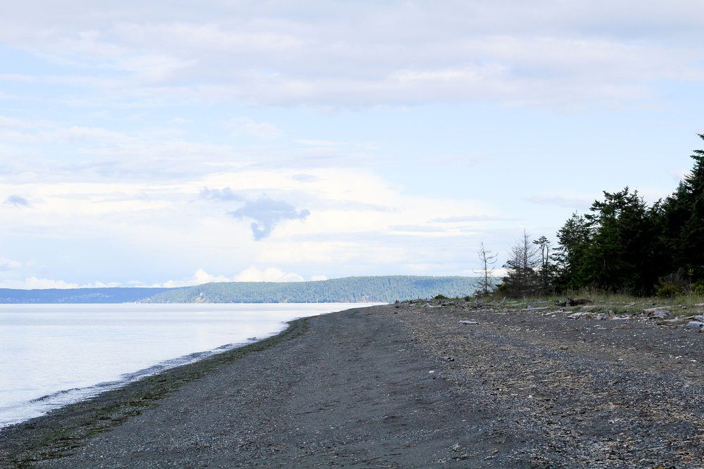 Along the beach in Sequim, Washington — Cotton Cashmere Cat Hair
