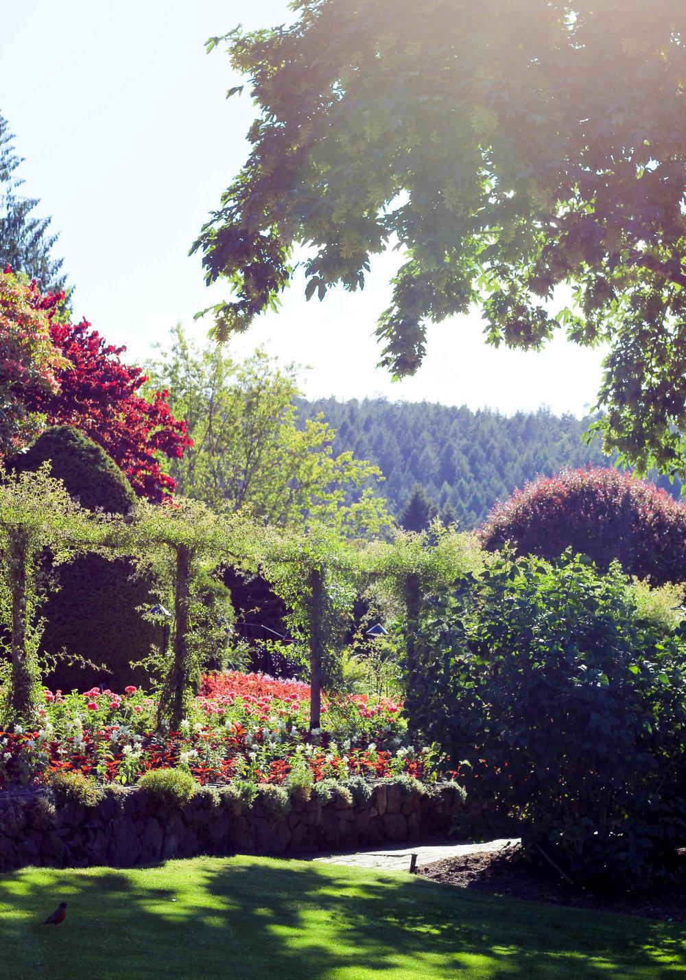 The Butchart Gardens, British Columbia — Cotton Cashmere Cat Hair