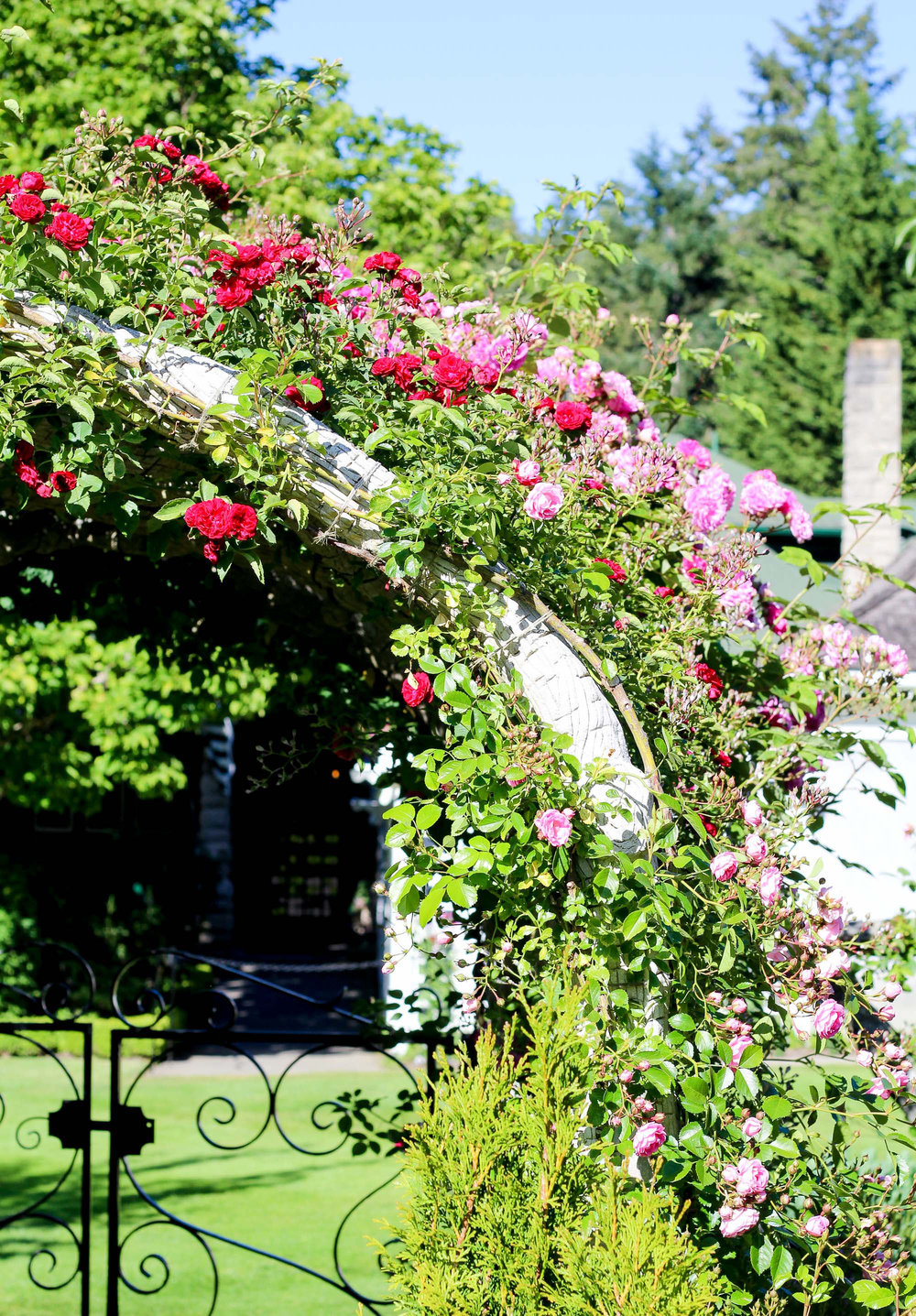 Rose Garden at Butchart Gardens, British Columbia — Cotton Cashmere Cat Hair