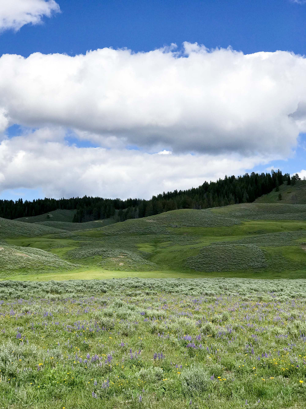 hayden-valley-yellowstone.jpg