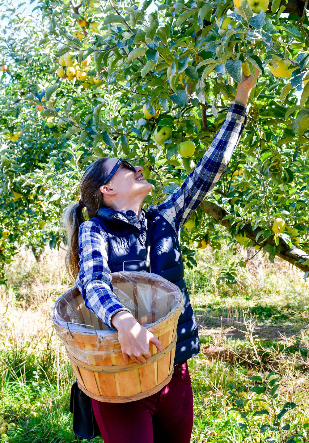 Fall apple picking in plaid shirt — Cotton Cashmere Cat Hair