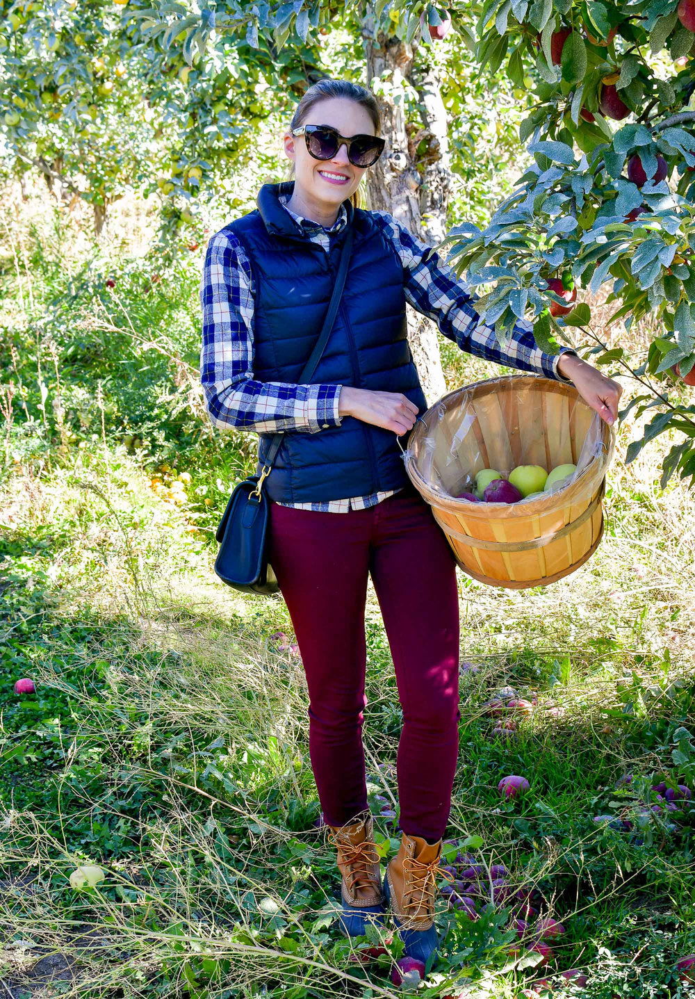Fall outfit with navy vest and burgundy pants — Cotton Cashmere Cat Hair