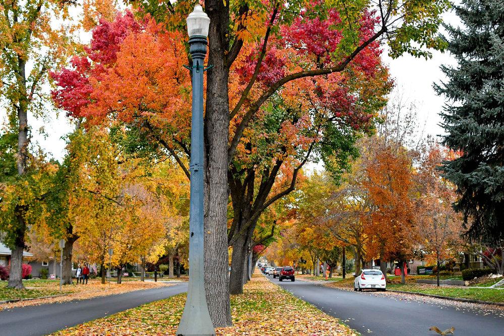 Harrison Boulevard, North End Boise, Idaho — Cotton Cashmere Cat Hair