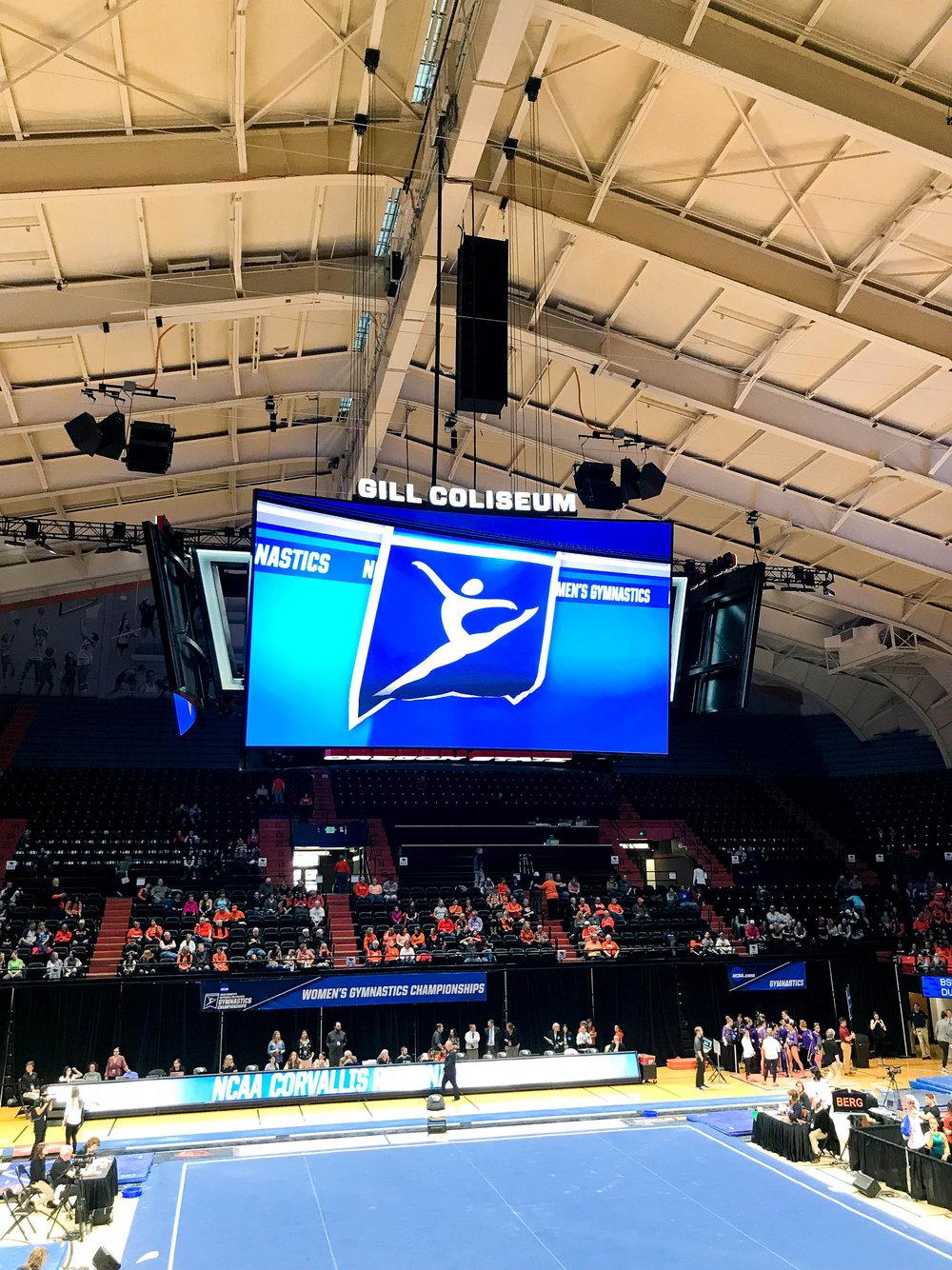 Gymnastics regional at Gill Coliseum, Oregon State University — Cotton Cashmere Cat Hair