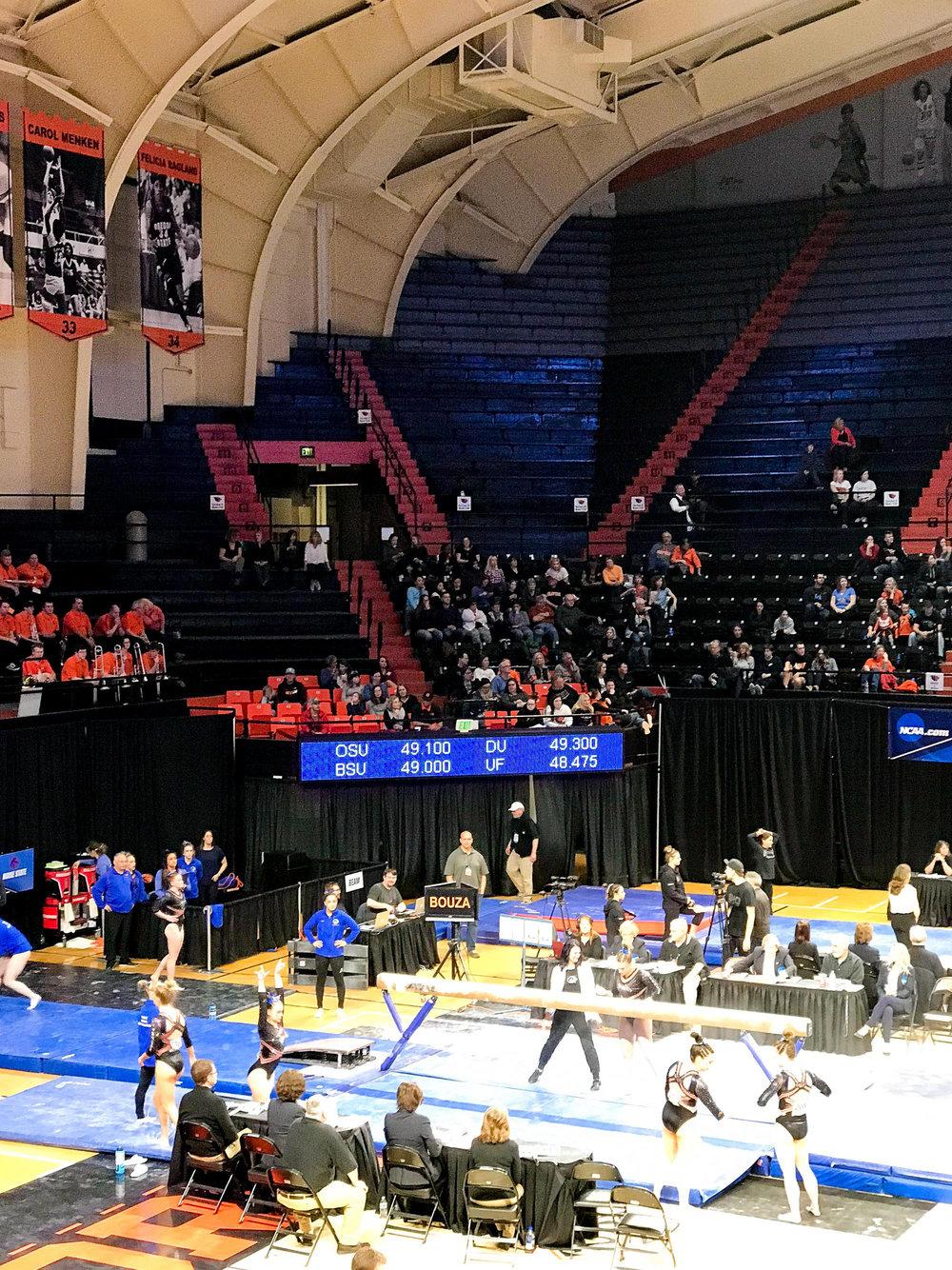 Corvallis gymnastics regional final — Cotton Cashmere Cat Hair