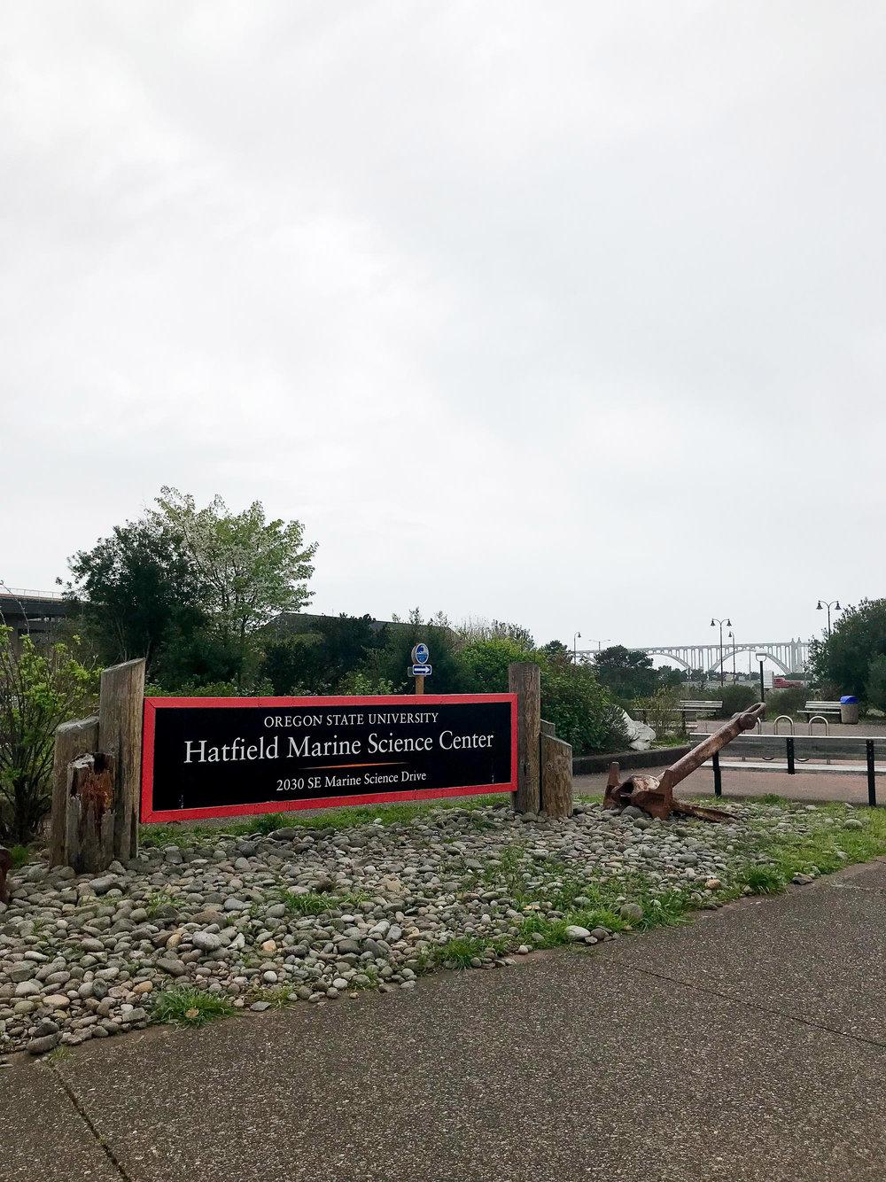 OSU Hatfield Marine Science Center — Cotton Cashmere Cat Hair