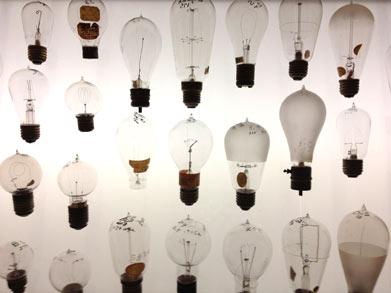 Bulbs-Lg.jpg