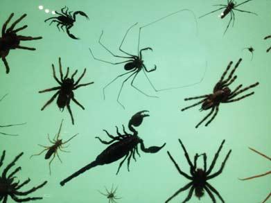 SpidersLg.jpg