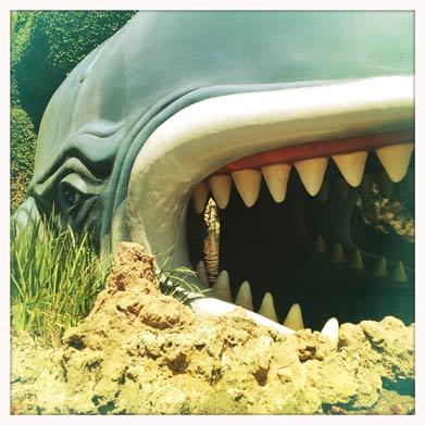 Whale-Lg.jpg