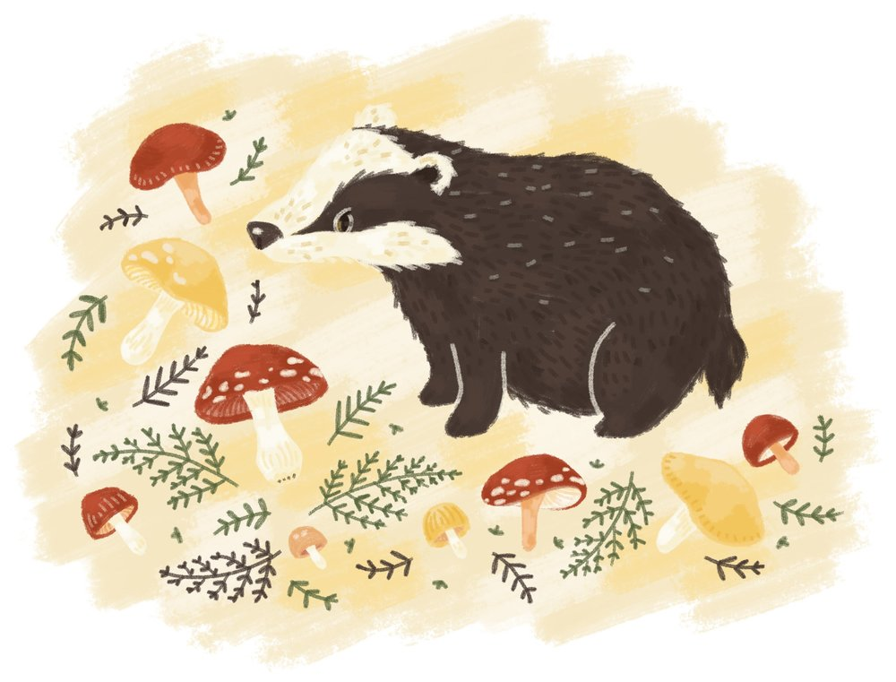 Badger and Mushrooms