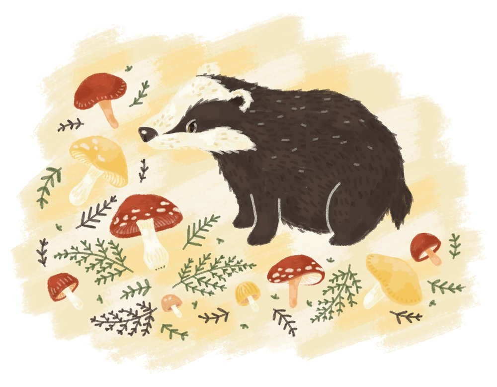 Illustrated badger with mushrooms.
