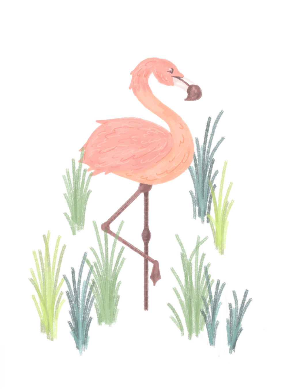 Flamingo illustration, standing in reeds.