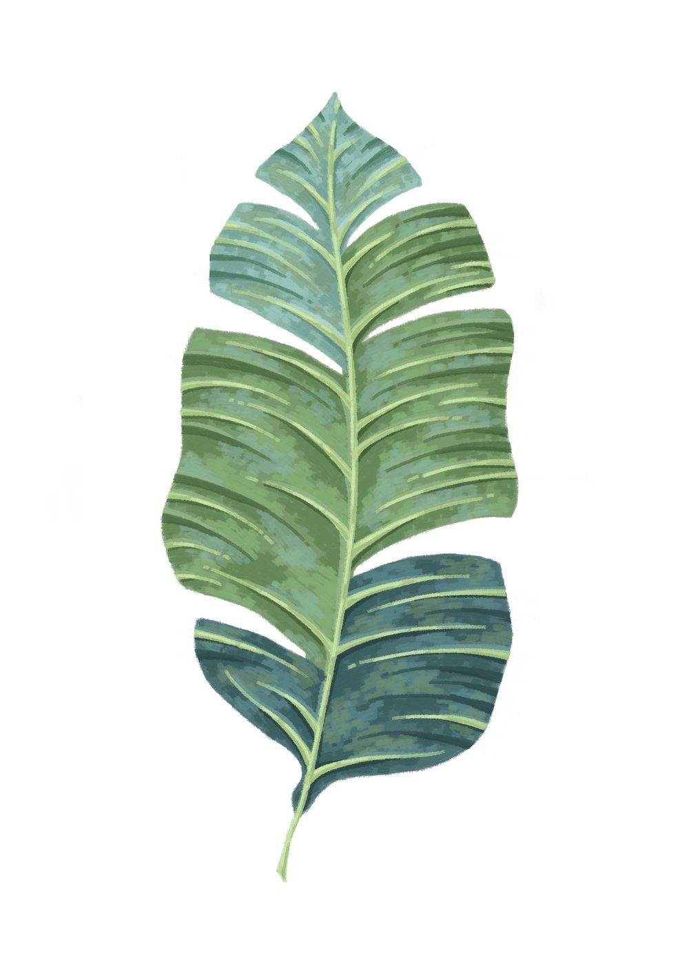 Palm leaf illustration.