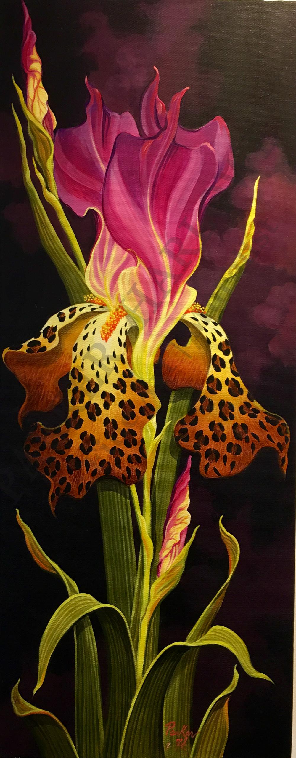 leopard-iris.png