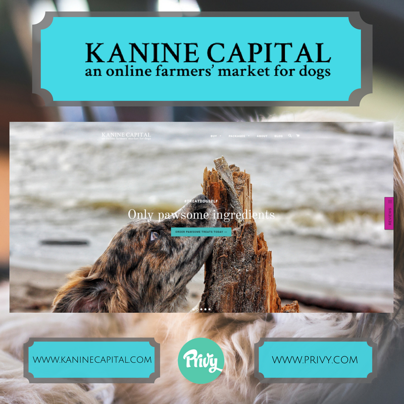 KanineCapital.png