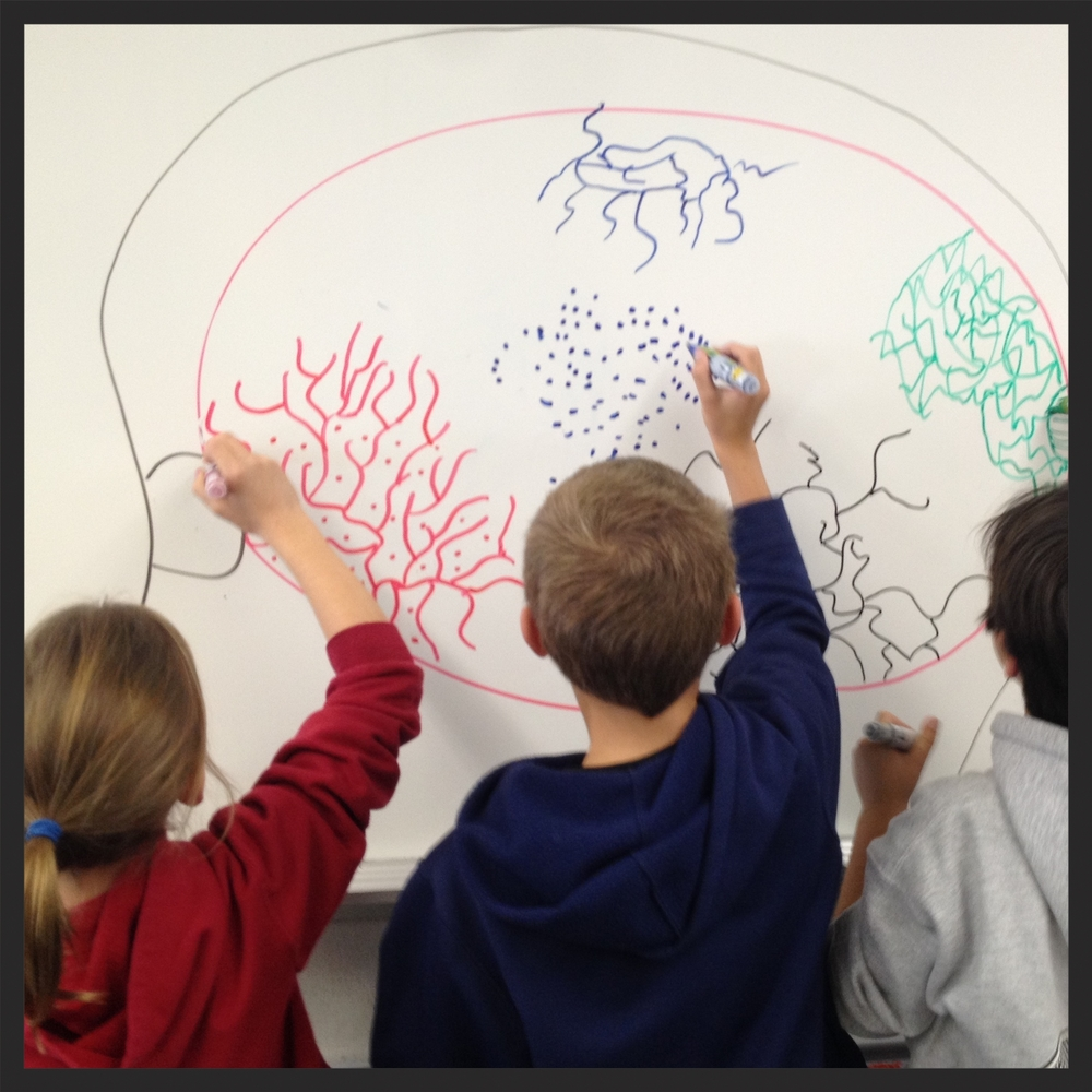 Young people draw neural networks changing after learning about their brains.