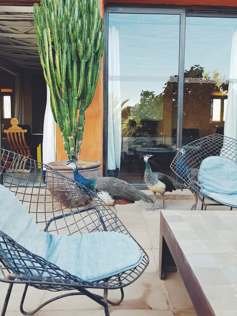 MOROCCAN RETREAT - Featuring Matt Ribeiro da Cruz