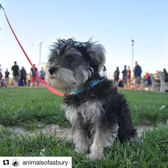 #Repost @animalsofasbury ・・・ Listening to the coolest kids playing @asburyparklive right now! 🤘