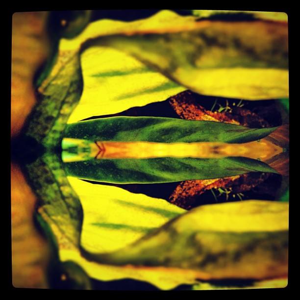 #kitcam #split #dublin #sherrie  http://instagr.am/p/U3cXovMBjY/