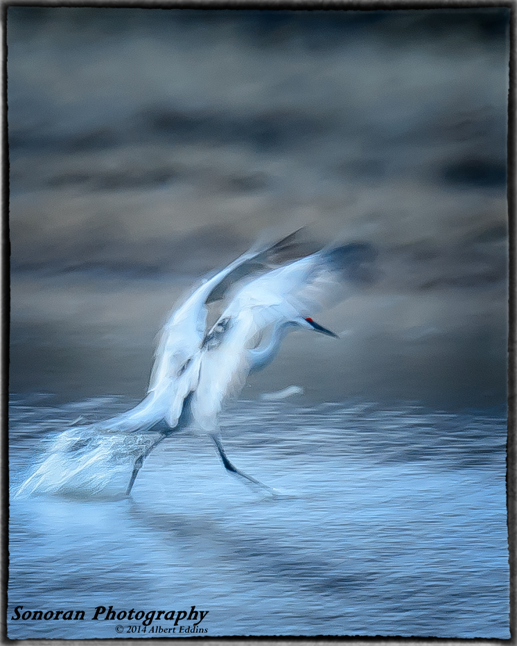 Sandhill Crane Walking on Water - New Mexico